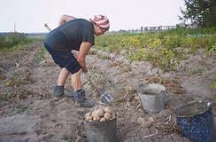 Russia_farm_2